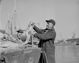 Unloading and processing at catch at South Boston fish pier 1941 - Courtesy of the Boston Public Library, Leslie Jones Collection.