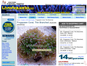 Euphyllia paradivisa, a popular aquarium coral commonly called frogspawn, is now listed as threatened under the Endangered Species Act.