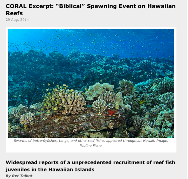 Maui-Based diver Pauline Fiene shows CORAL Magazine's Readers what the unprecedented recruitment event looked like.