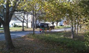 Our Community Supported Agriculture (CSA) Program Delivers by Horse-Drawn Wagon