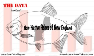 Non-native characins, like the pacu, have been introduced to every New England state except Rhode Island.