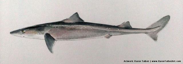 Spiny Dogfish by Karen Talbot