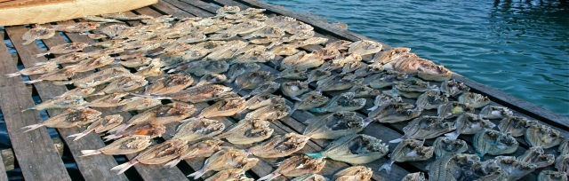dried-fish-banggai